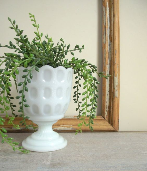houseplant house plant in milk glass