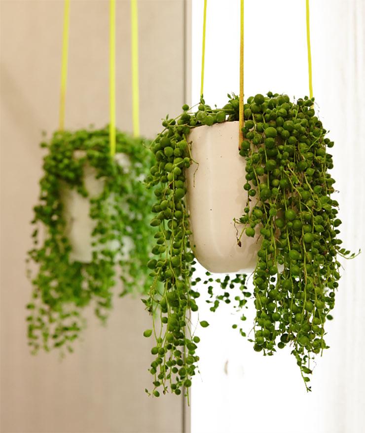 5 Indoor Plants We Love Cocoweb Quality Led Lighting